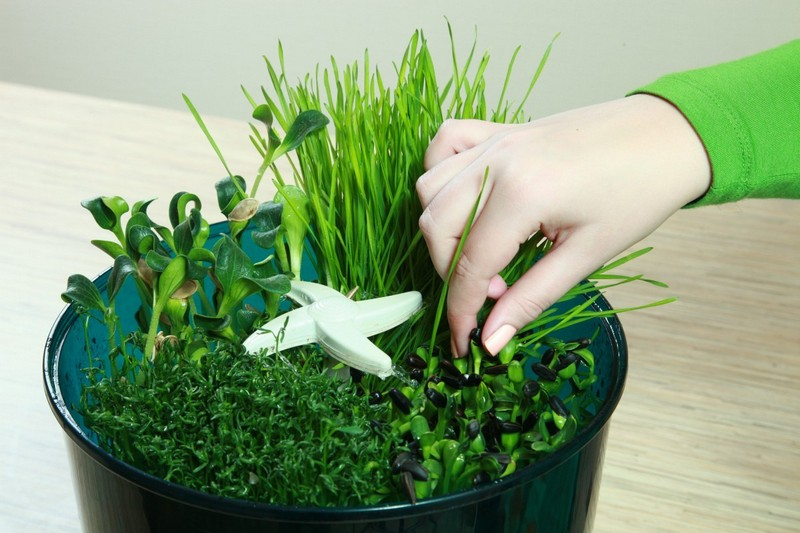 автоматический проращиватель семян фото