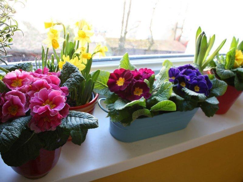 подходящие цветы для кухни фото