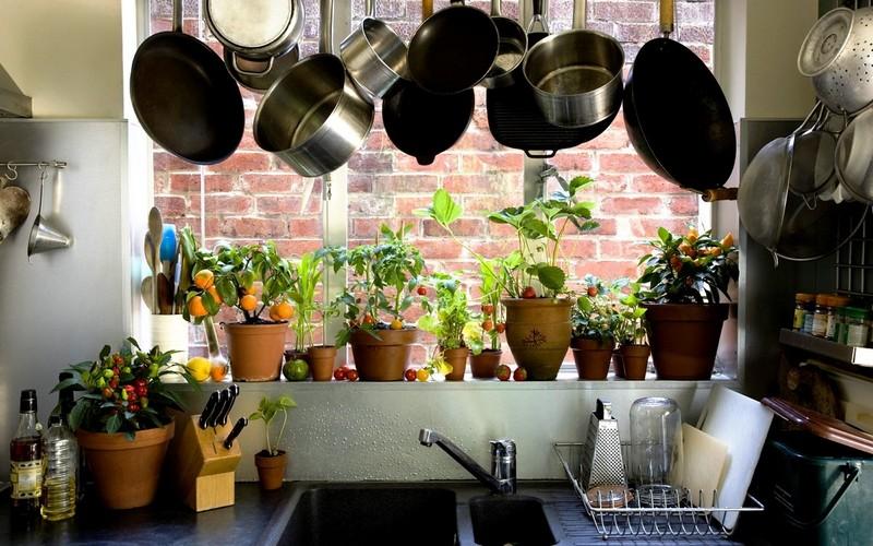 цветы для кухни фото