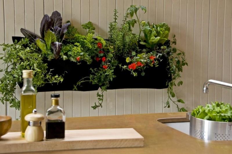 комнатные цветы для кухни фото