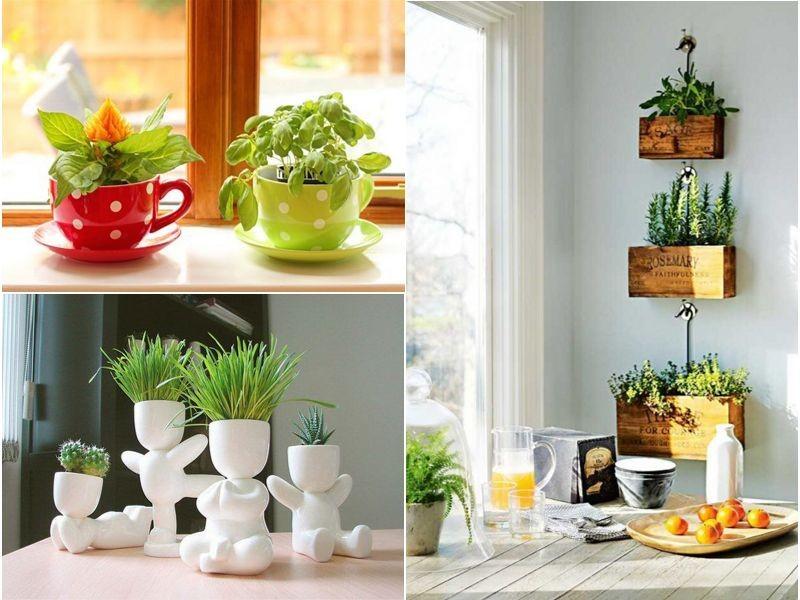 лучшие цветы для кухни фото